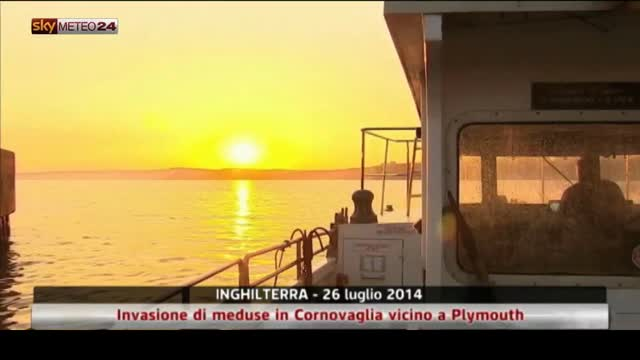 Inghilterra, invasione di meduse in Cornovaglia. Video