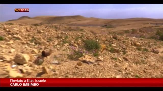 Israele, il 60% del prodotto agricolo viene dal deserto