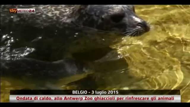 Caldo in Belgio, gli animali dello zoo si rinfrescano