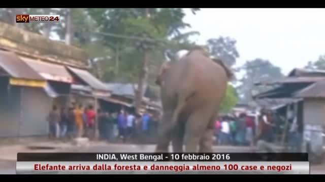 Elefante danneggia 100 baracche in India