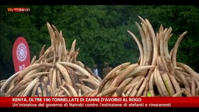 Kenya, oltre 100 tonnellate di zanne d'avorio al rogo