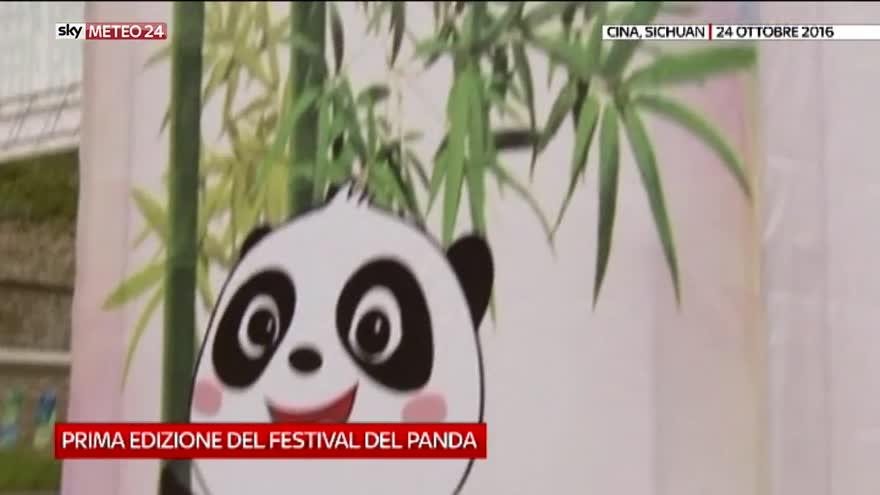 Festival del panda in Cina: le immagini