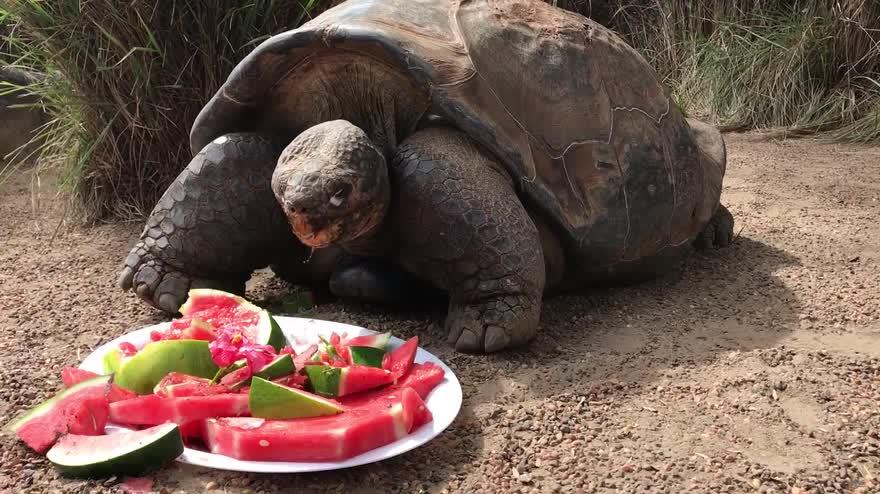 Il 67esimo compleanno di hugo la tartaruga delle galapagos video sky for Prezzo tartarughe