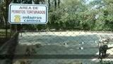 Messico, il miracolo canino
