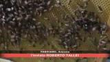 31/07/2008 - Pesticidi, diminuscono le api