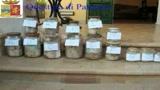 Palermo, polizia trova 500mila euro sepolti sotto terra