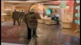 30/01/2009 - La giornata di mercato