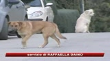 Bimbo sbranato a Ragusa, arrestato il custode del cane