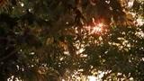 IL GIARDINO DELLE VERGINI SUICIDE - il trailer