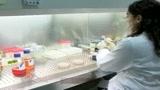 04/05/2009 - Influenza A, salgono a 4 i casi conclamati in Italia