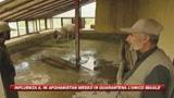 Afghanistan, in quarantena l'unico maiale