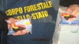 30/07/2009 - Mozzarelle di bufala, sequestrate confezioni fasulle