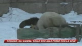 Pechino, gli animali dello zoo alle prese con la neve