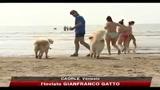 Sicurezza in spiaggia, all'opera i cani-bagnino