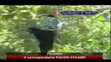 27/07/2010 - Droga, CC scoprono piantagione marijuana a Palermo