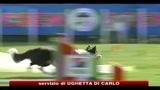 Roma, 10 cani rieducati e dati in adozione