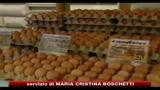 Diossina: chiusi in Germania oltre 4700 allevamenti