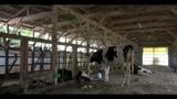 Fukushima, strage di animali dopo la catastrofe nucleare