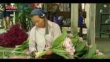 Lost & Found, Thailandia: il primo Festival dei tulipani