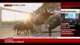 San Firmino, 100 feriti nelle strade di Pamplona
