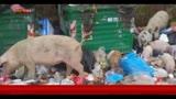 30/12/2013 - Rifiuti Roma, piano intervento straordinario per il decoro