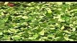 17/03/2014 - Narcotraffico, Saviano: Spagna è porta europea della coca