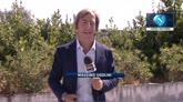 Playoff Champions, allenamenti blindatissimi per il Napoli
