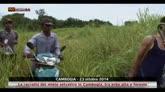 Cambogia, raccolta miele selvatico tra erba alta e foreste