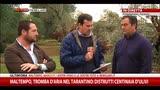 13/11/2014 - Tromba d'aria nel tarantino: distrutti centinaia di ulivi