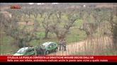 29/04/2015 - Xylella, Puglia contesta le drastiche misure decise dall'Ue