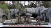 Neve e ghiaccioli donati agli orsi dello zoo di San Diego