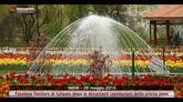 20/05/2015 - Fioritura dei tulipani in Kashmir