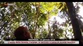 Oranghi messi in pericolo da incendi in Indonesia