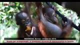09/02/2016 - Scuola per orangotanghi