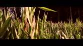 28/04/2016 - LA NOTTE NON FA PIÙ PAURA - il trailer