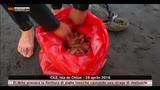 28/04/2016 - Alghe tossiche e moria di molluschi in Cile