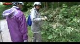 30/05/2016 - Giappone, lasciato nella foresta per punizione a 7 anni