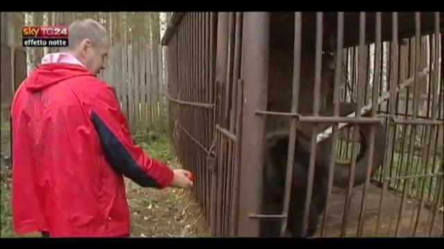Lost & Found, Russia, Biologi adottano un orso abbandonato