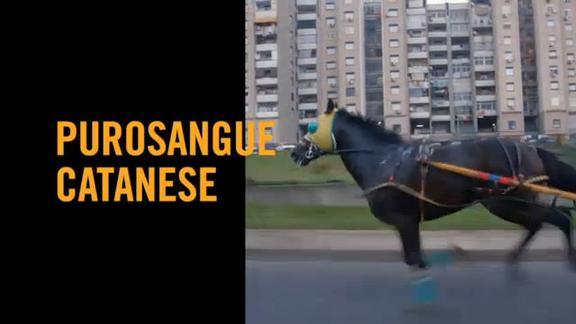 Vice on Sky TG24: purosangue catanese