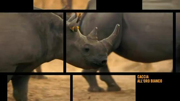 Vice on Sky TG24: caccia all'oro bianco