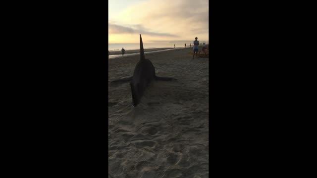Avvistato squalo a Riccione