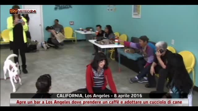 Los Angeles: apre il bar dove si può adottare un cane