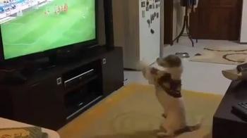Fenerbahce, ecco il cane ultrà: l'esultanza è incredibile