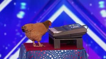 La gallina suona l'inno americano