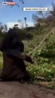 Sister hacked: Florida nun's chainsaw skills