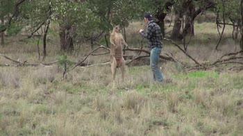 Uomo sfida canguro che gli aveva sequestrato il cane