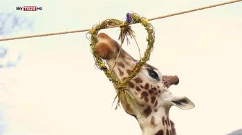 Anche gli animali festeggiano S