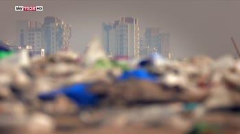 ERROR! Metà delle tartarughe del mediterraneo ha ingerito plastica