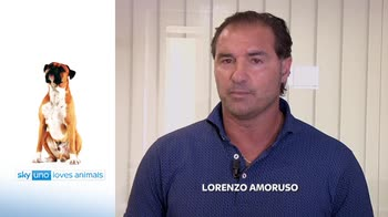 Sky Uno Loves Animals 2: Lorenzo Amoruso