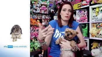 Sky Uno Loves Animals 2: LaSabri